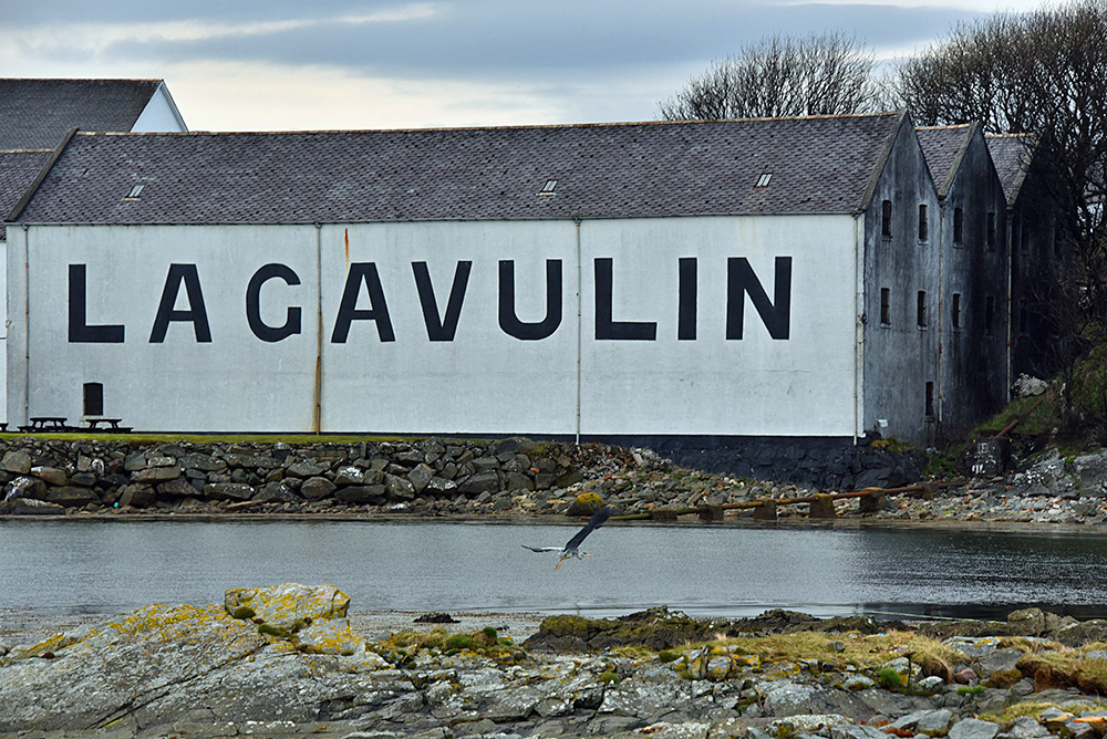 Picture of a Heron flying below a Lagavulin distillery warehouse