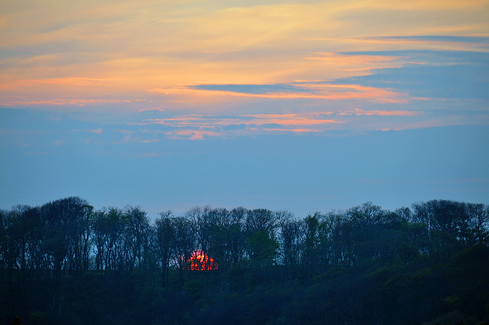 Picture of an April sunset behind a woodland