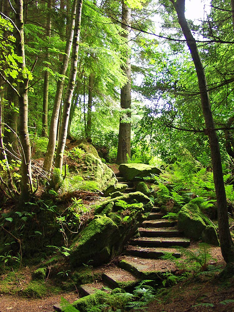 Picture of some stone stairs with mossy rocks beside them in a woodland park