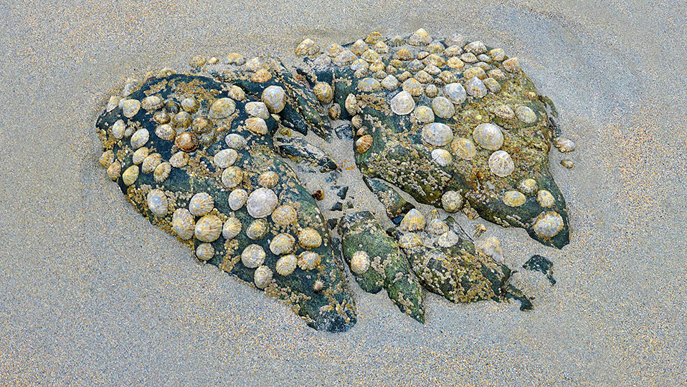 Picture of a group of stones covered in mussels on a beach